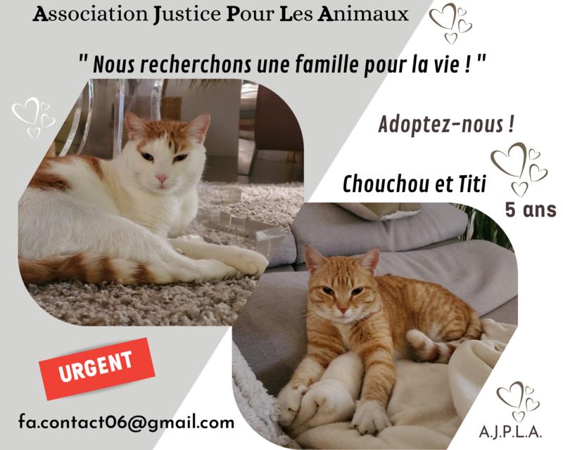 Illustration pour l'actualité Titi et Chouchou recherchent une famille pour la vie !