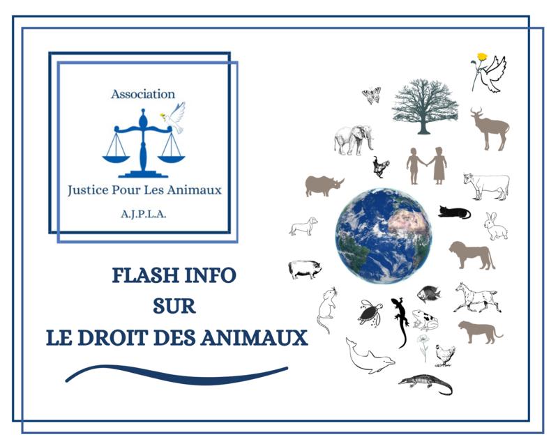 Illustration pour l'actualité ℹ️ Flash info sur les droits des animaux