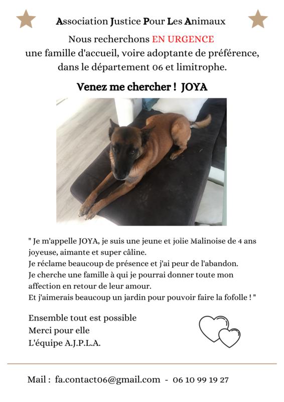 Illustration pour l'actualité Joya recherche une famille !
