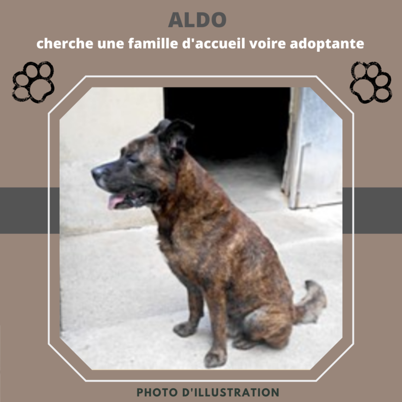 Illustration pour l'actualité Aldo cherche une famille d'accueil voire adoptante