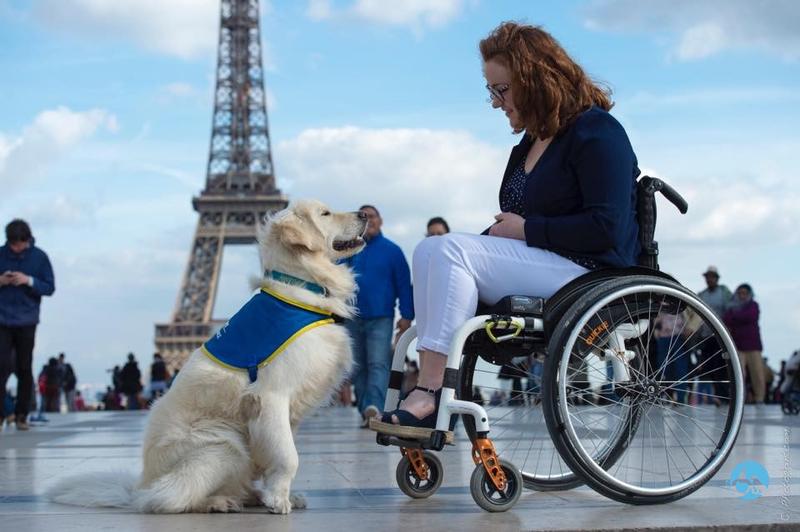 Illustration pour la mission Eduquer et socialiser un futur chien d'assistance